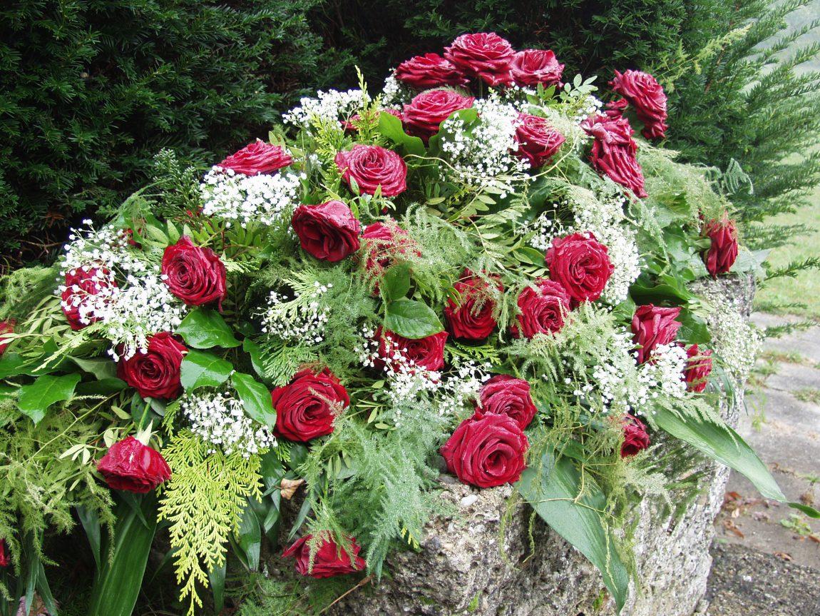 roses-61203.jpg